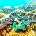 Giant Clam Sanctuary One of the Famous Tourist Destination in Samal Island