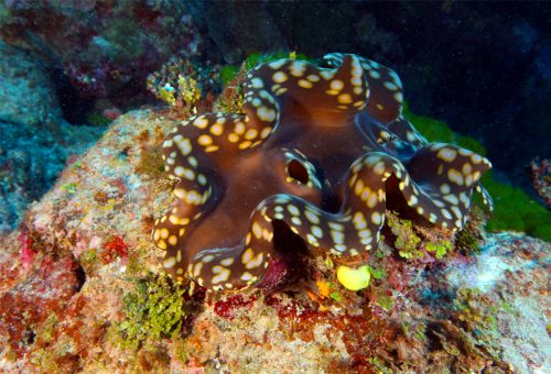 Giant Clam Sanctuary: One of the Famous Tourist Destination in Samal Island