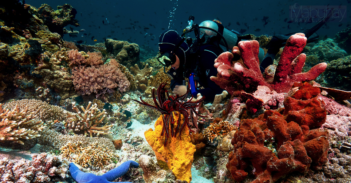 Diving destinations - Anilao